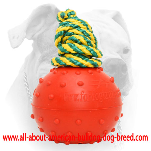 Water rubber ball with doted surface for American Bulldog