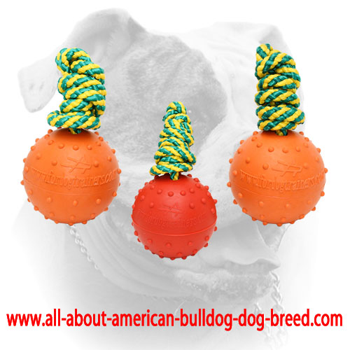 Bright rubber balls for American Bulldog training