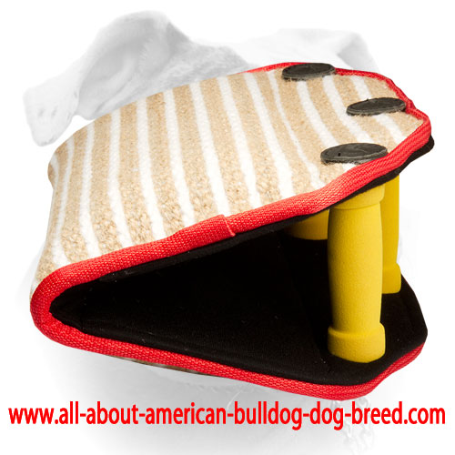 American Bulldog bite builder with three soft handles