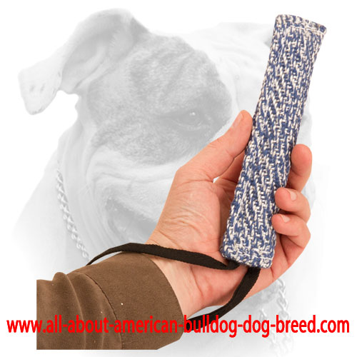 French Linen tug for American Bulldog training
