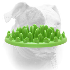 American Bulldog pet feeder for healthy meal