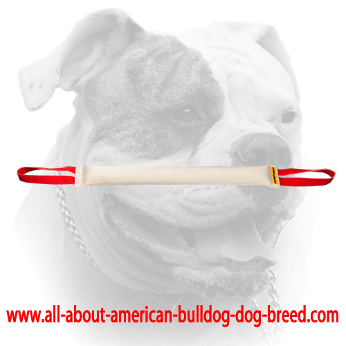 Long bite tug of Fire Hose for American Bulldog