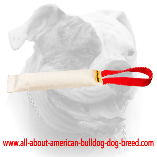 American Bulldog puppy bite tug with one or two handles