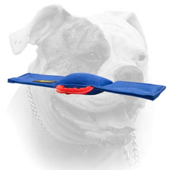 American Bulldog bite tug of French Linen