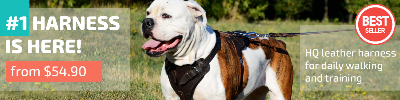 Agitation / Protection Leather Dog Harness for American Bulldog