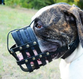 How to measure your American Bulldog for good fit muzzle